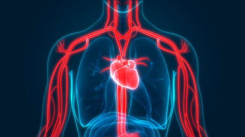 Cardiovascular diseases | Flemington NJ